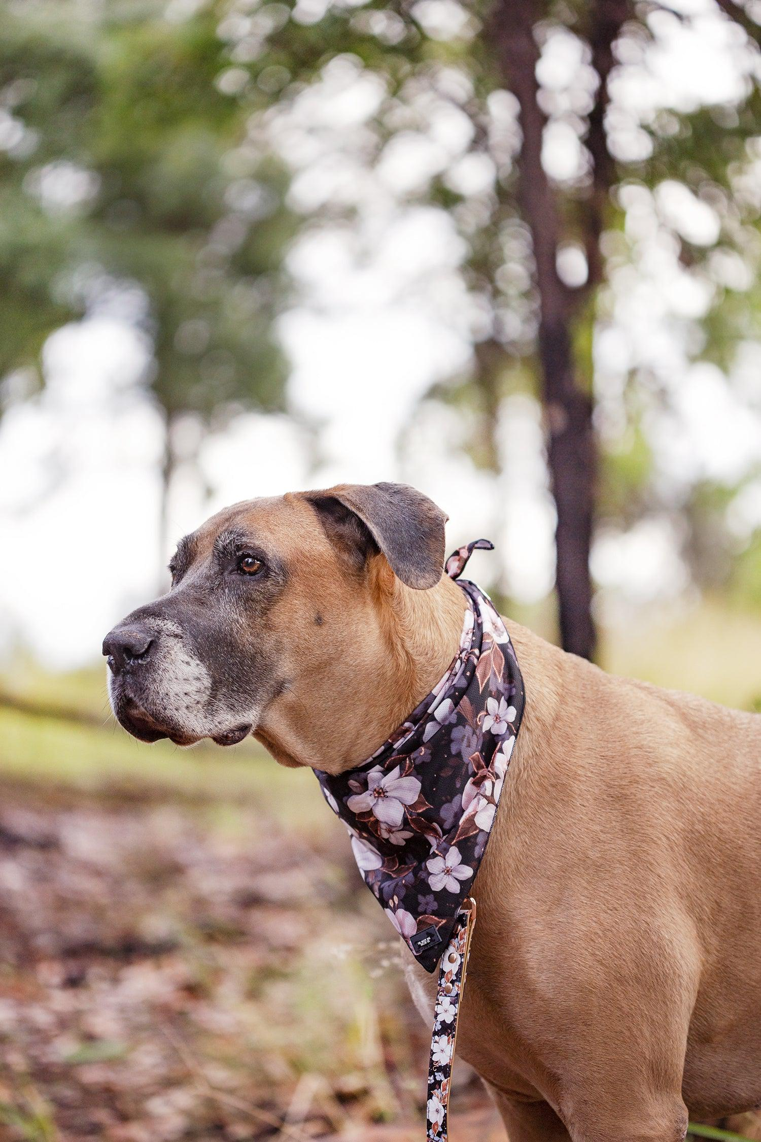 Dog Bandana - Tie Up Bandana - Midnight Cherry Blossoms-Dizzy Dog Collars