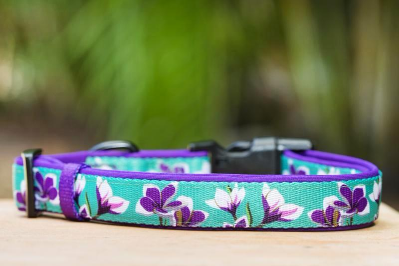 flower dog collar, dog collar Australia, Dog Collar, Dog Harness, French Bulldog Harness