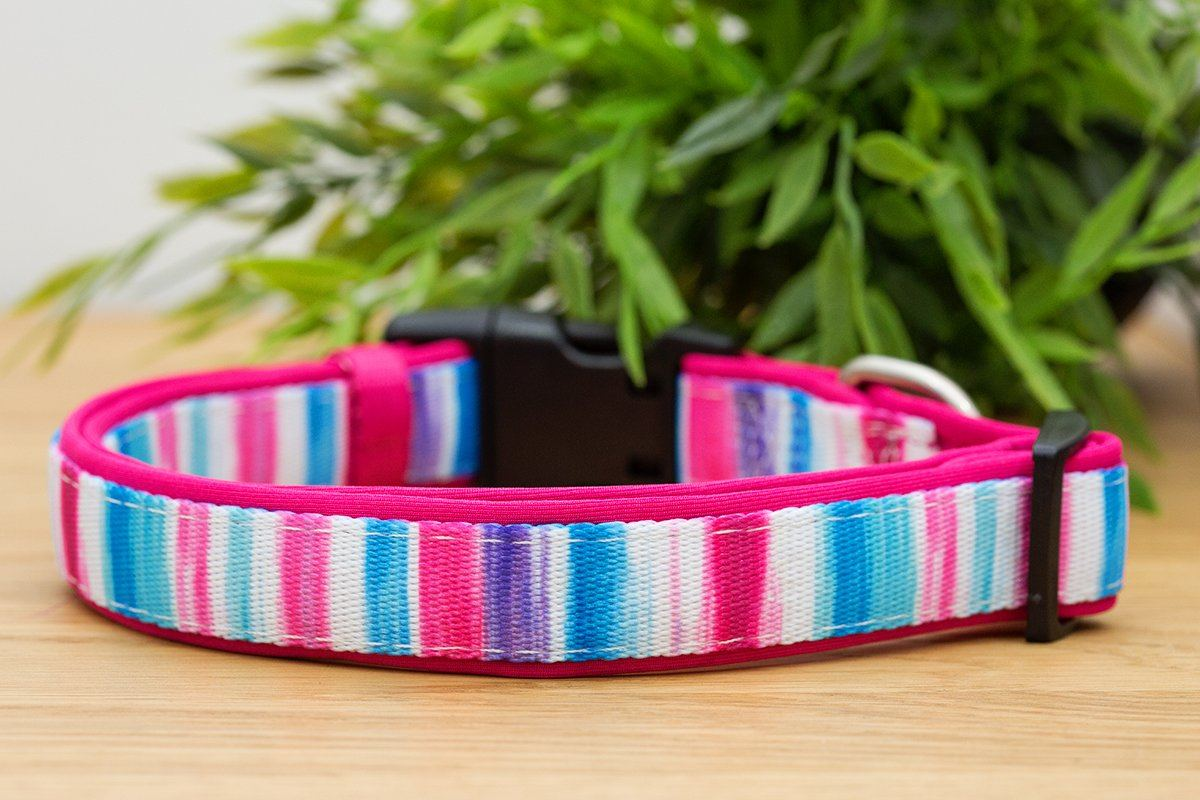 Pink Artist Palette Dog Collar (Neoprene)-Dog Collar-Dizzy Dog Collars-Extra Small 1.5cm Wide-Dizzy Dog Collars
