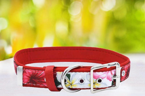 Tropical Hibiscus - Belt Buckle Dog Collar