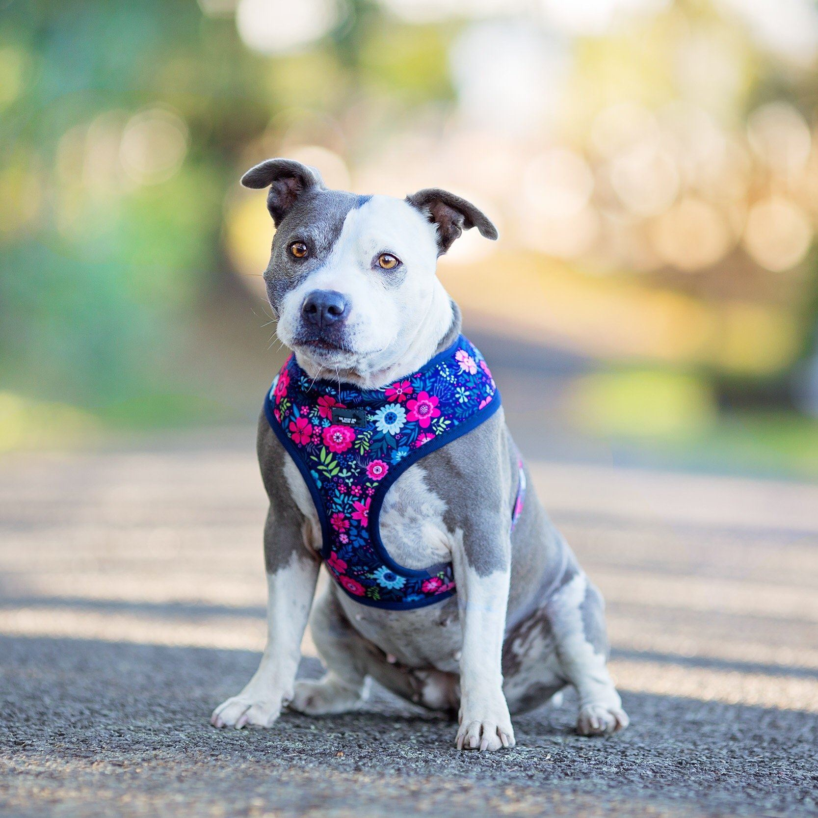 small dog harness, this is the best small dog harness, DOG HARNESS - Navy Floral - Standard Dog Harness-Dizzy Dog Collars-XS-Dizzy Dog Collars