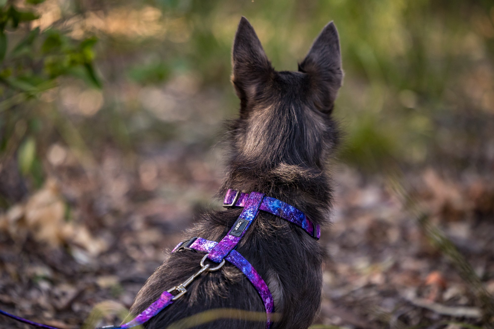 DOG HARNESS, Galaxy - Fully Padded H-Harness, With Front & Back Attachment - (Handmade to Order)-Harness-Dizzy Dog Collars
