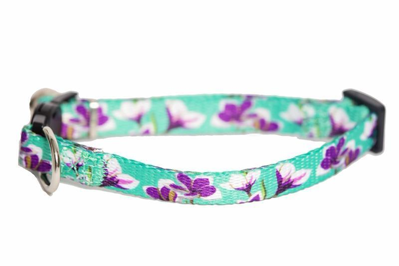 cat collar australia, floral cat collar, this beautiful floral cat collar features frangipani flowers on a nice aqua green background, by Dizzy Dog Collars Australia
