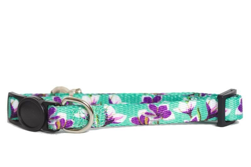 cat collar, cat collar australia, floral cat collar, this beautiful floral cat collar features frangipani flowers on a nice aqua green background, by Dizzy Dog Collars Australia