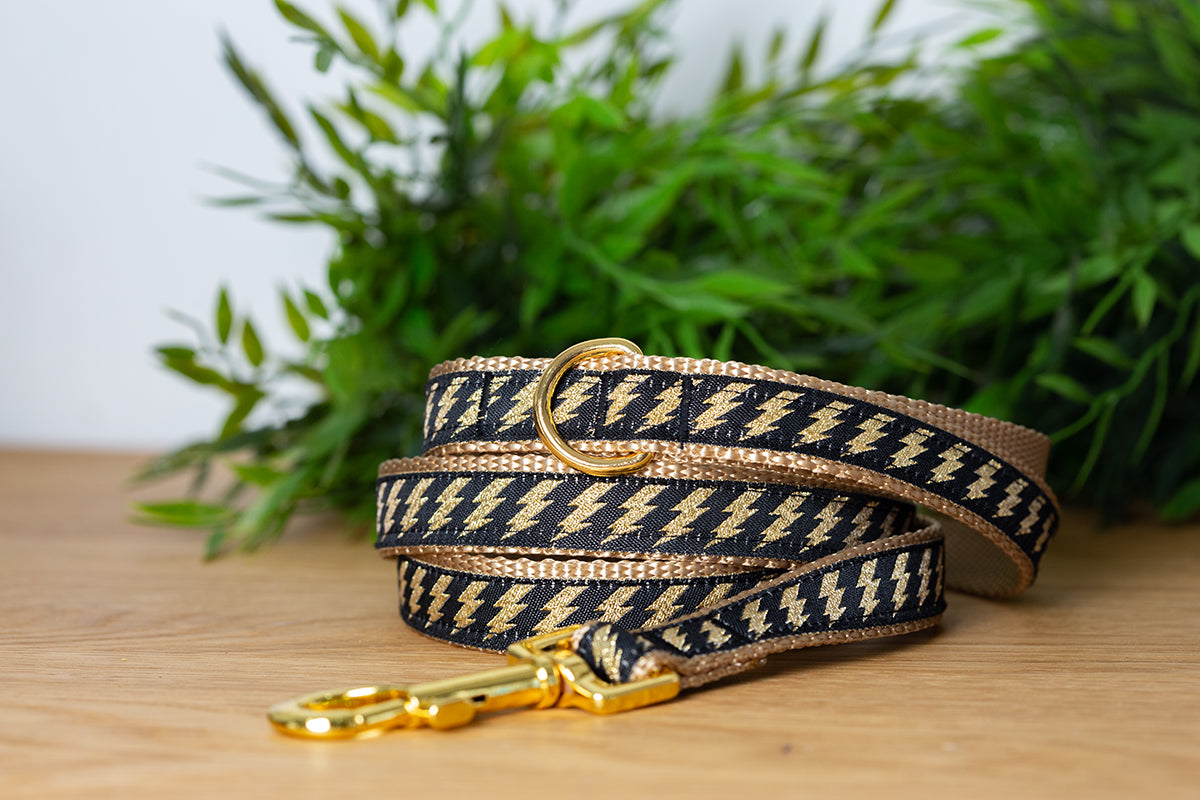 Gold Bolt Dog Leash / Gold Dog Lead-Dizzy Dog Collars-Dizzy Dog Collars