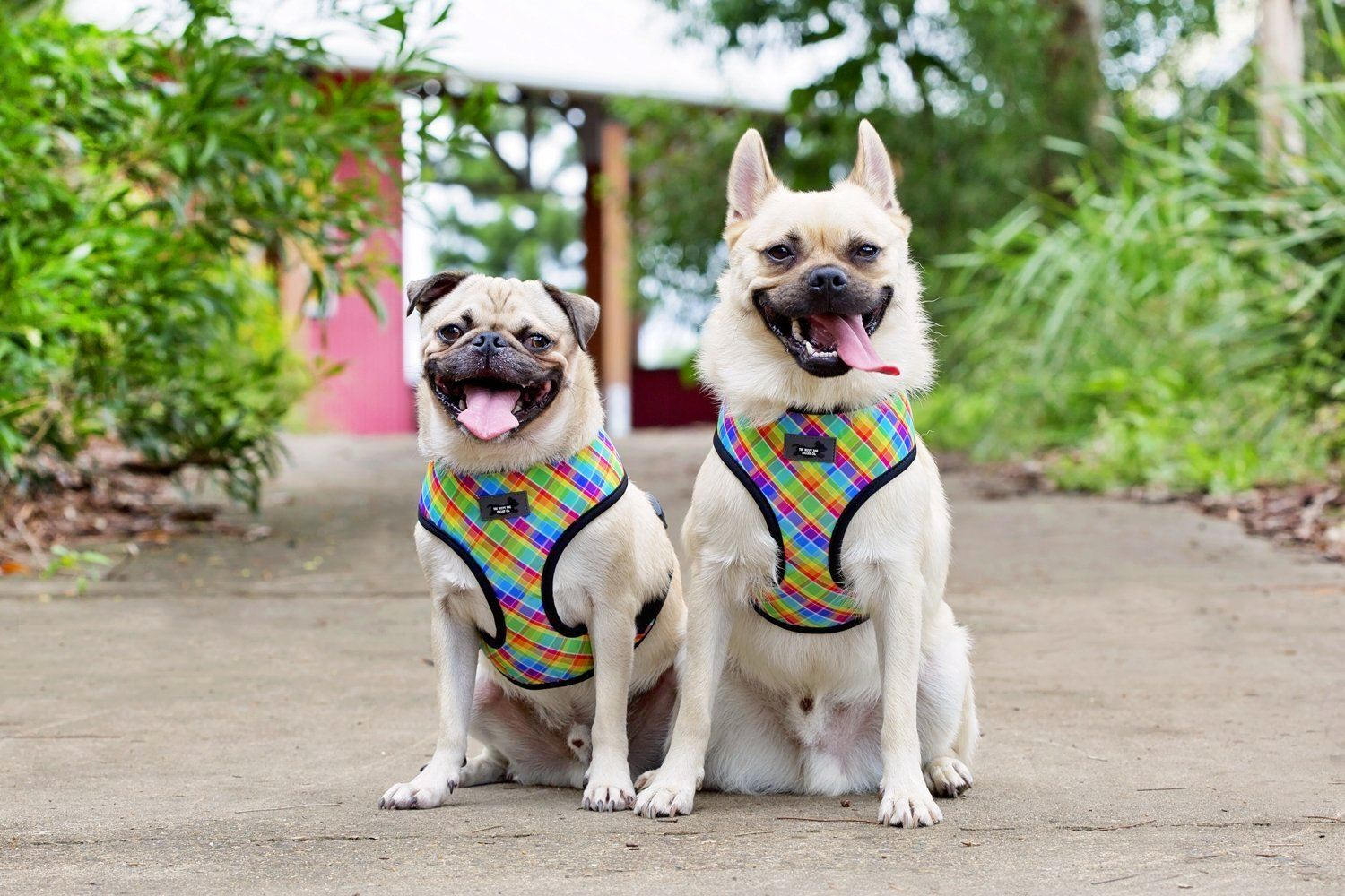DOG HARNESS - Candy Plaid- Standard Dog Harness-Harness-Dizzy Dog Collars-Extra Small-Dizzy Dog Collars