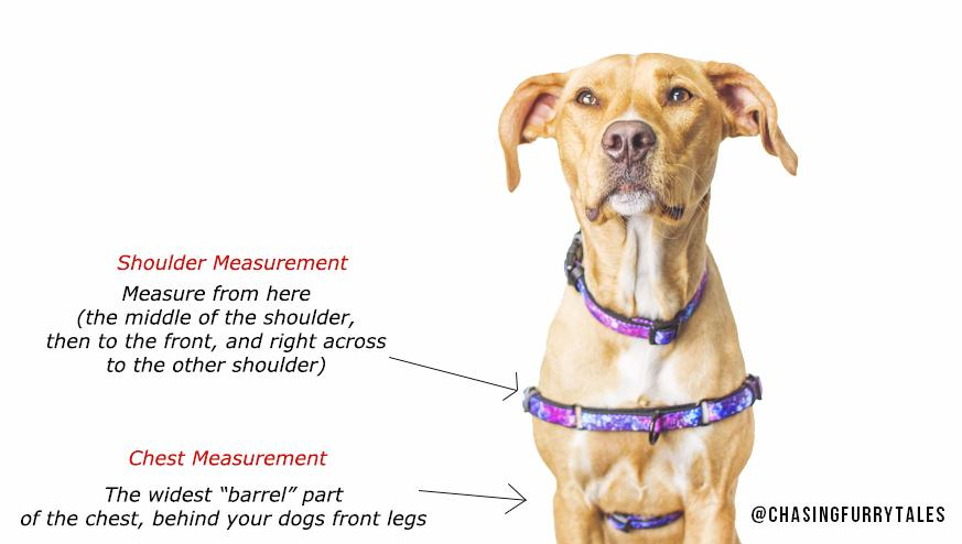 DOG HARNESS - Front Clip Dog Harness - Galaxy (Neoprene)-Harness-Dizzy Dog Collars-Small (Smaller Shoulder Width)-Dizzy Dog Collars