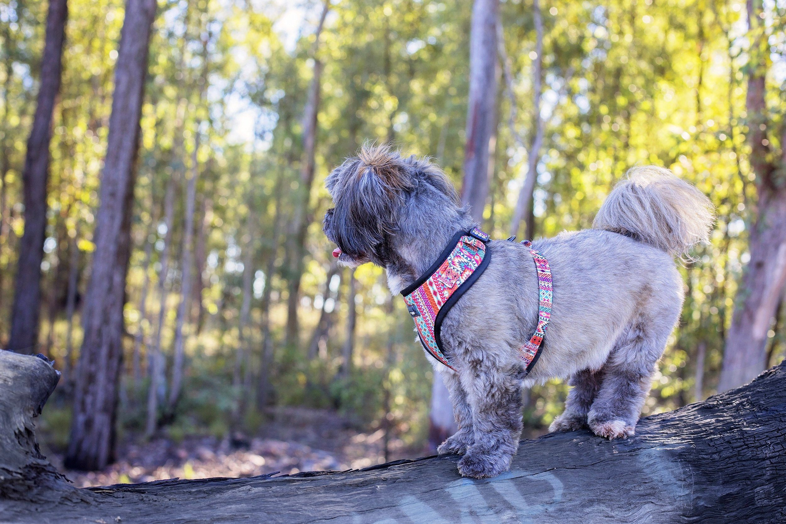 DOG HARNESS - Rustic Aztec - Adjustable-Harness-Dizzy Dog Collars-Extra Small-Dizzy Dog Collars