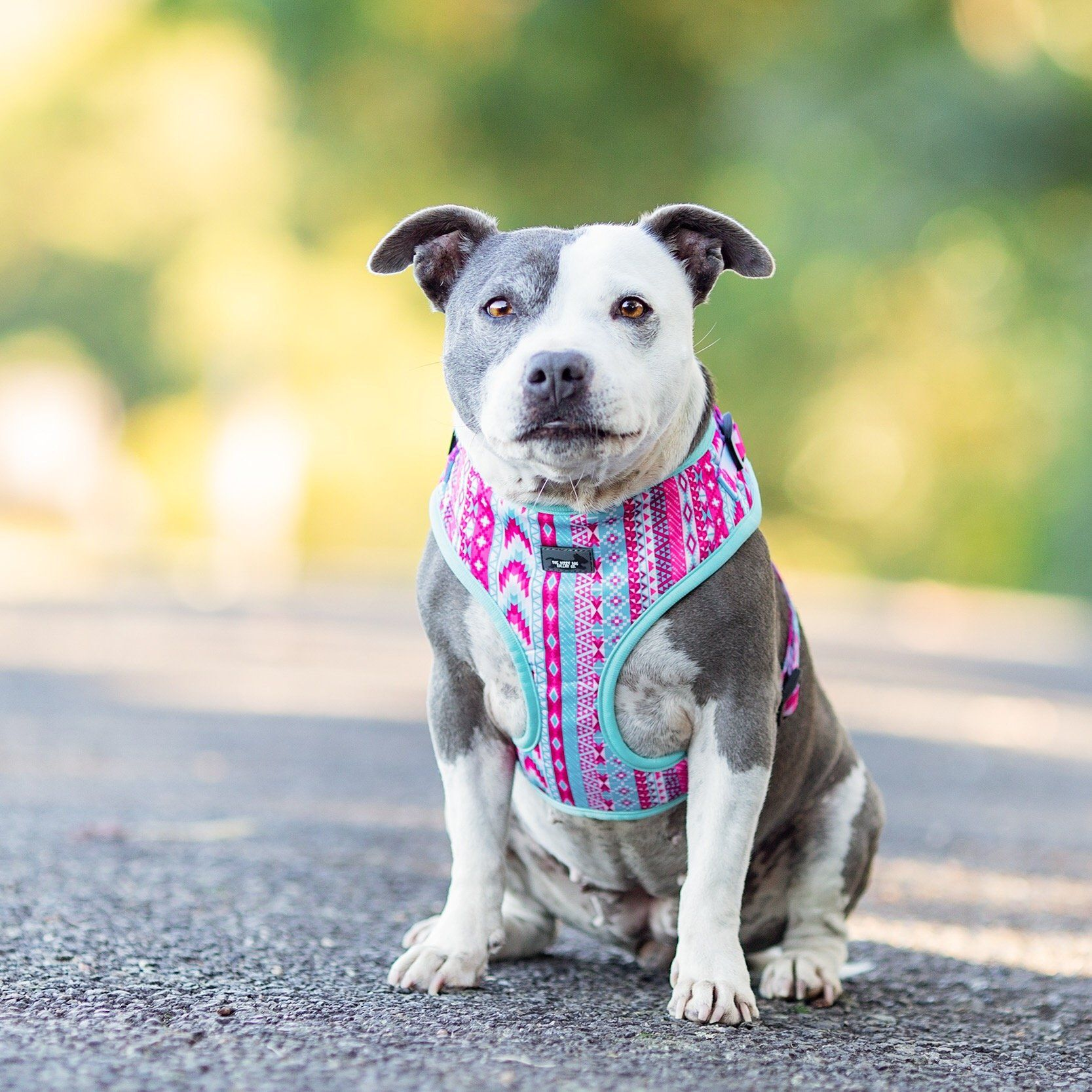 Pastel Aztec - Adjustable Dog Harness-Harness-Dizzy Dog Collars-Small-Dizzy Dog Collars