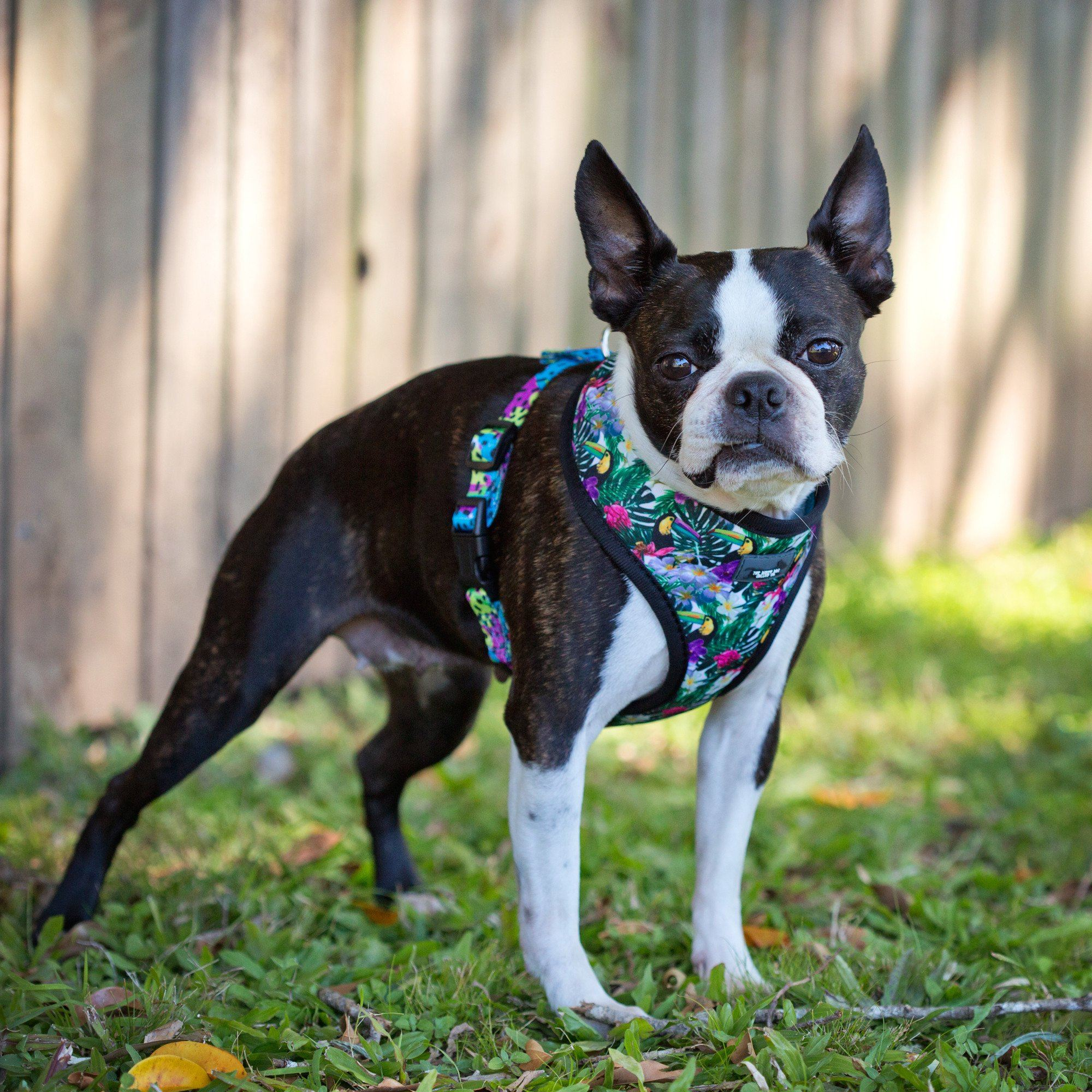 Tropical Toucans - Standard Dog Harness-Dizzy Dog Collars-Dizzy Dog Collars