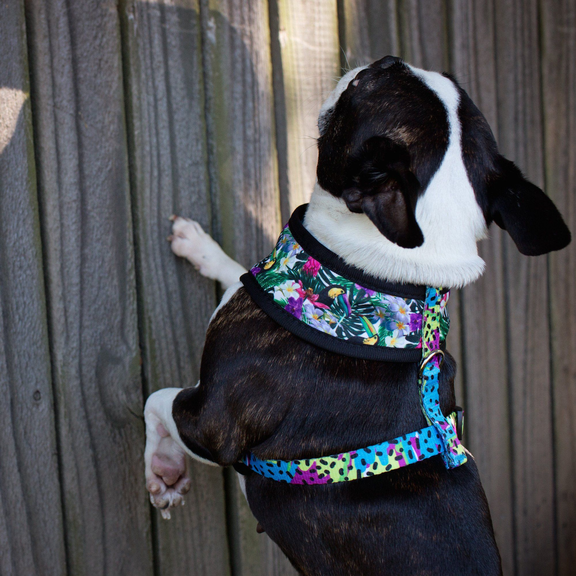 Tropical Toucans - Standard Dog Harness