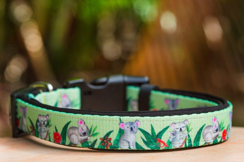 Koala Dog Collar (Premade)