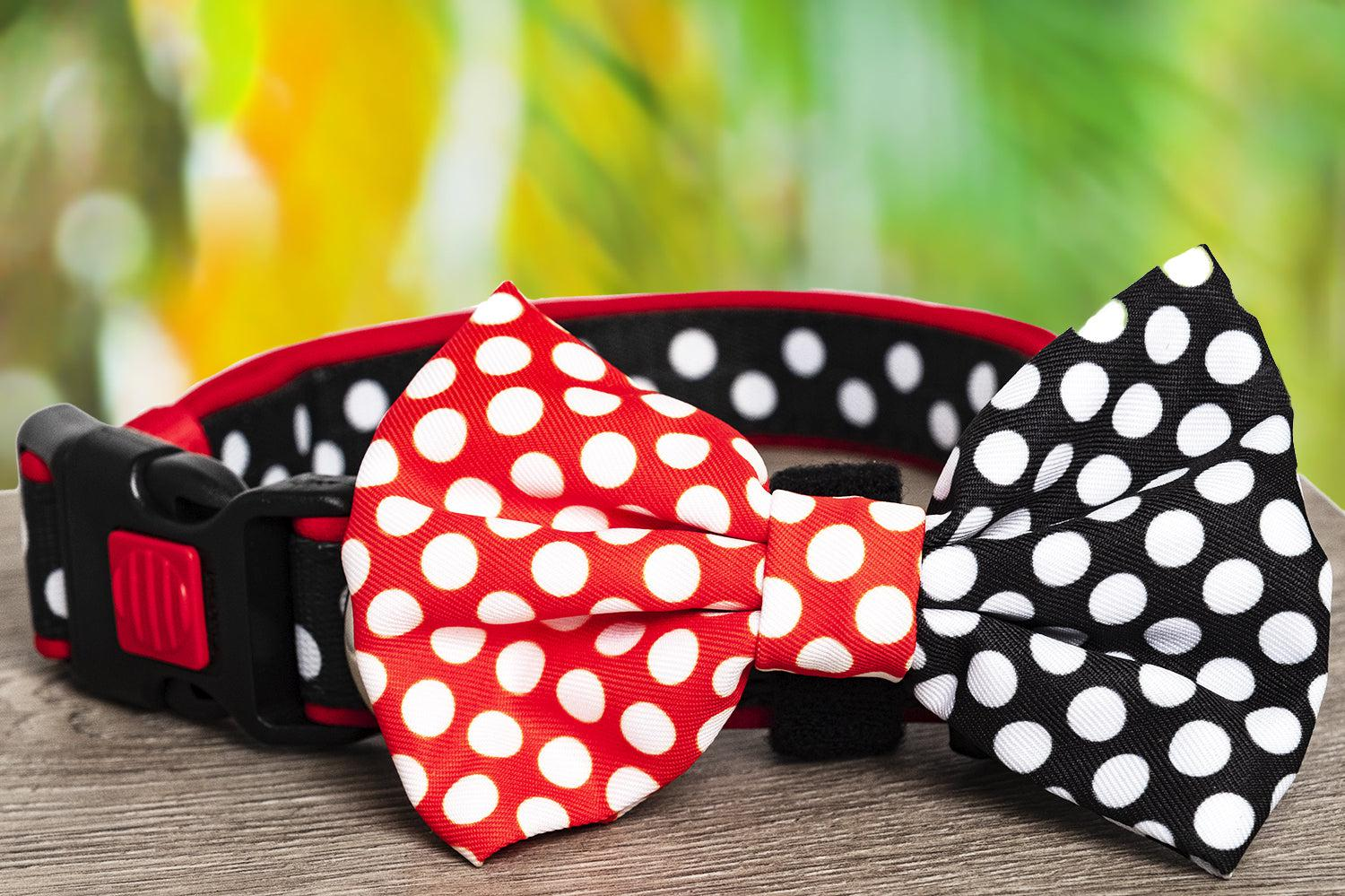 Mr Spotty Dox Dog Collar & Bow Tie (Neoprene)-Dizzy Dog Collars-Dizzy Dog Collars