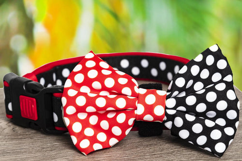 The Spotty Dox Dog Collar & Bow Tie (Premade)