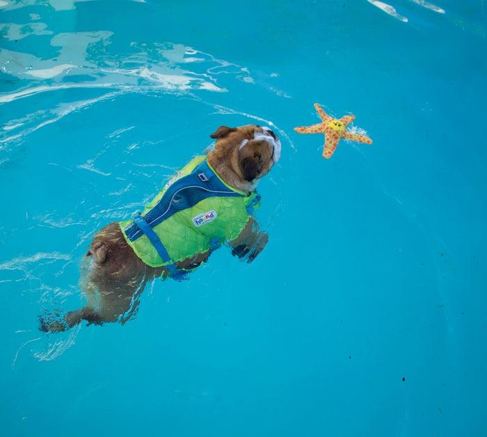 Floatiez Starfish - FLOATING WATER TOY By Outward Hound-Dizzy Dog Collars