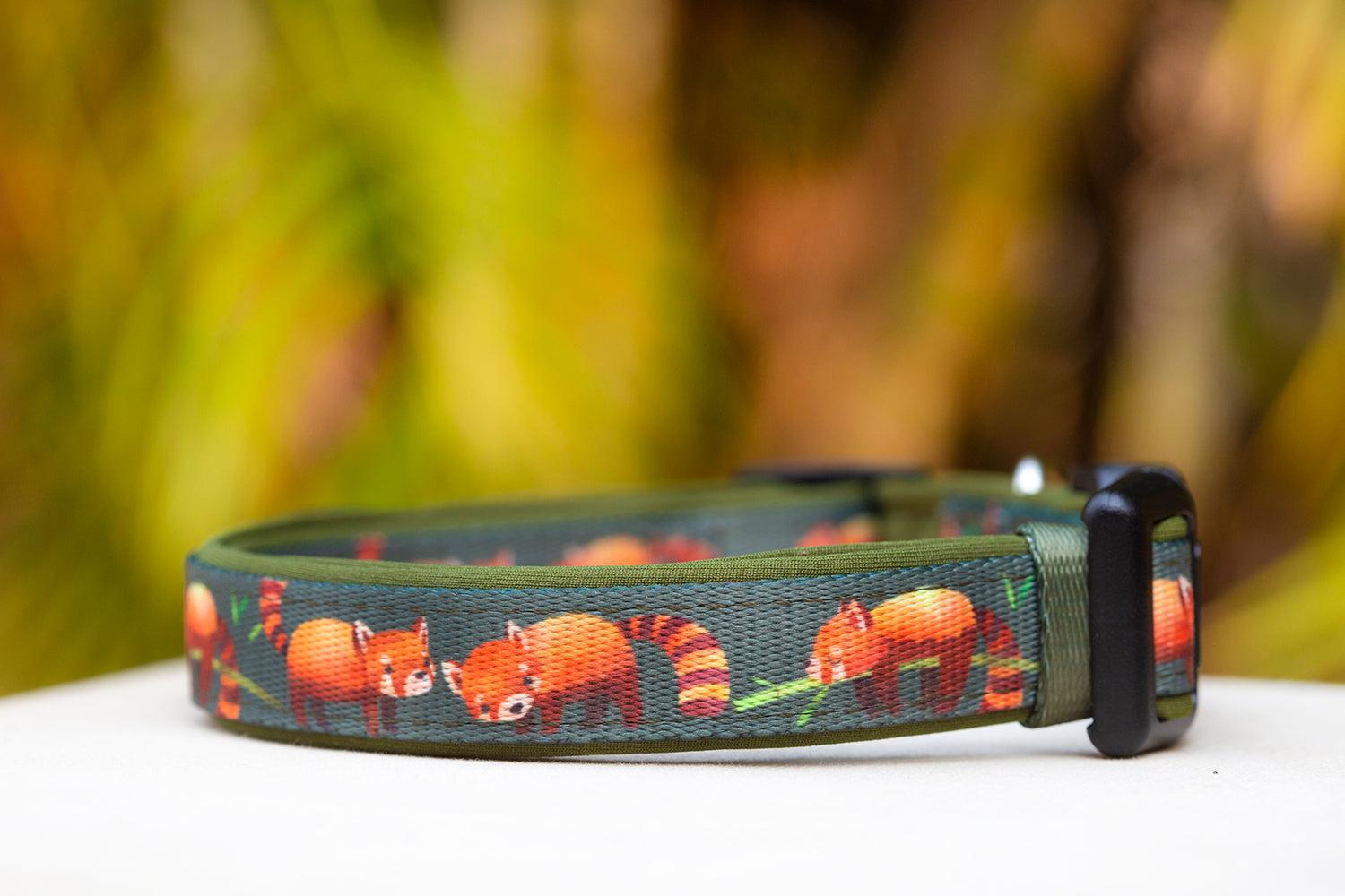 Red Panda Dog Collar (Premade)-Dog Collar-Dizzy Dog Collars