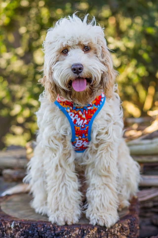 dog harness, harness, dog harnesses, best dog harness