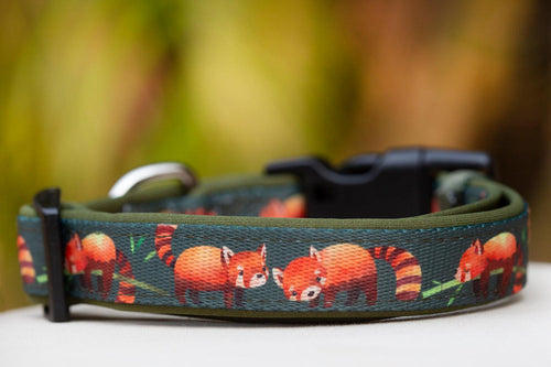 Red Panda Dog Collar (Premade)