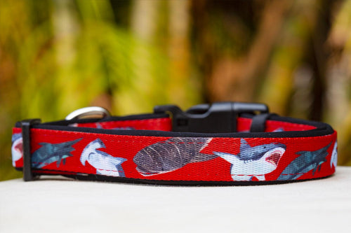 Red Sharks Dog Collar (Premade)