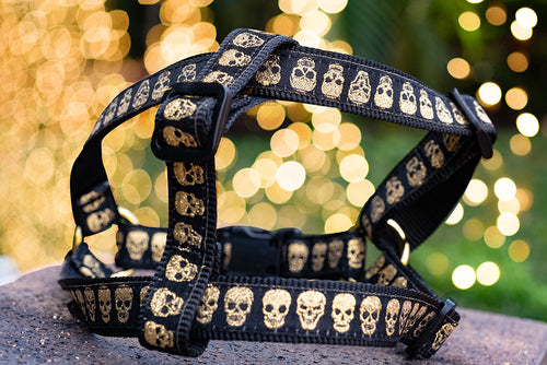 Gold Skulls Step In Dog Harness