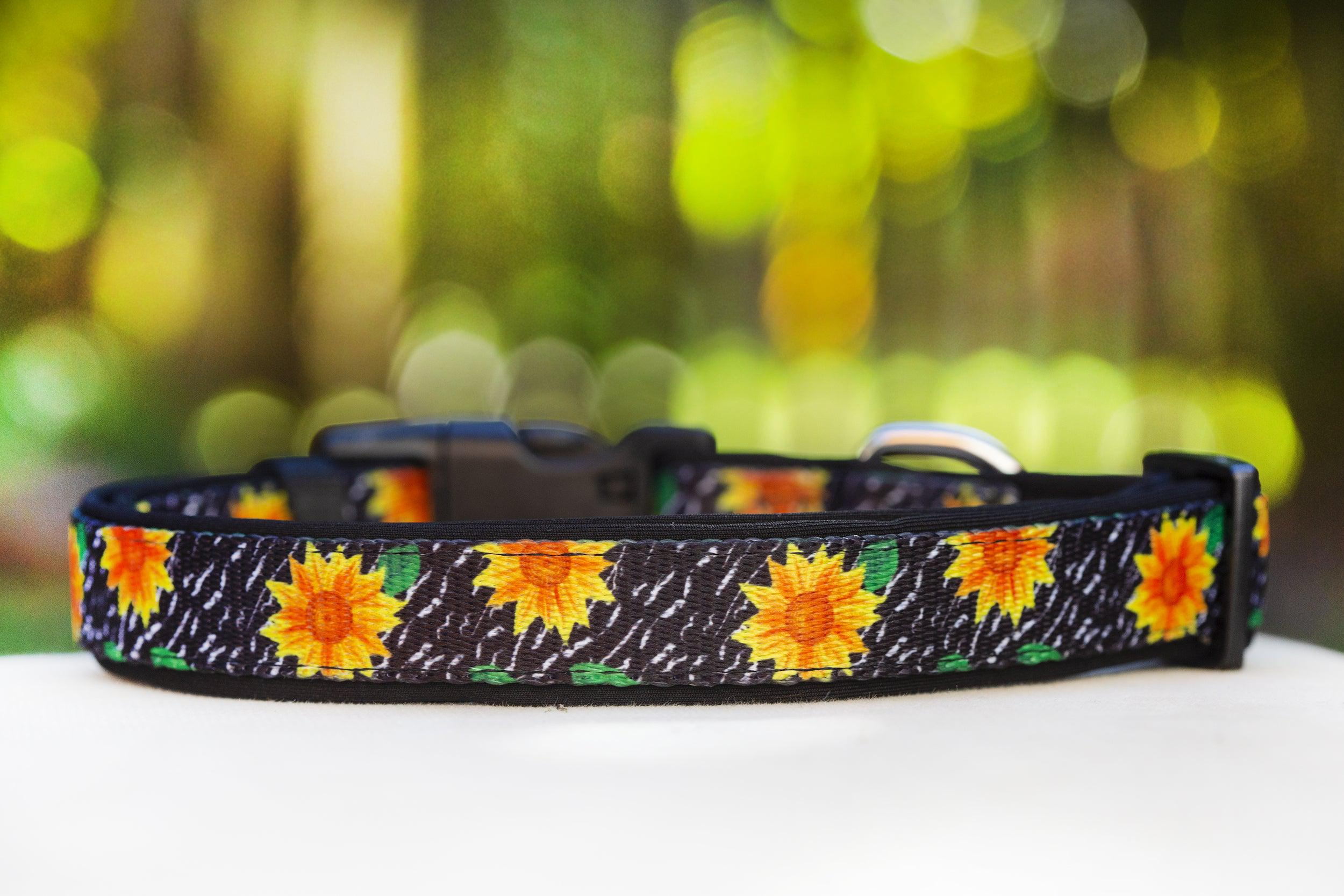 Sunflowers Dog Collar (Premade)-Dog Collar-Dizzy Dog Collars