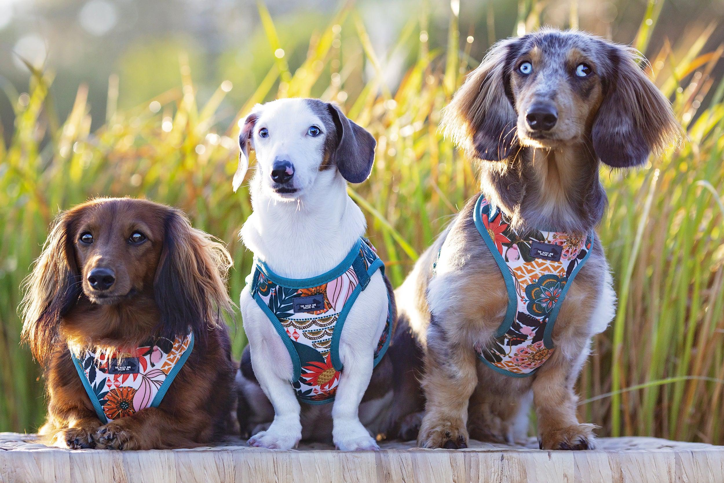 DOG HARNESS - Bohemian Garden - Neck Adjustable Harness (Premade)-Harness-Dizzy Dog Collars