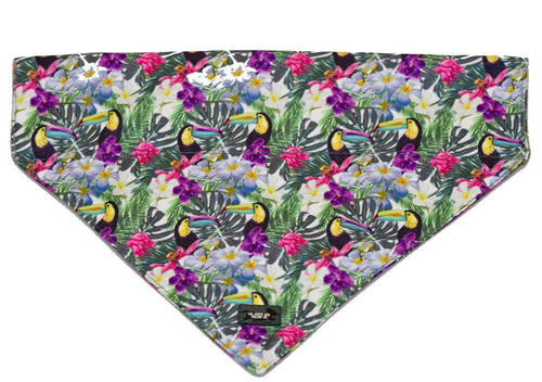 Tropical Toucan Bandana