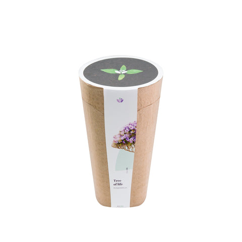 Kiri Bio Urn - Biodegradable for Human and Pet Cremation Ashes - Planting the tree of life! - Urn Of Memories