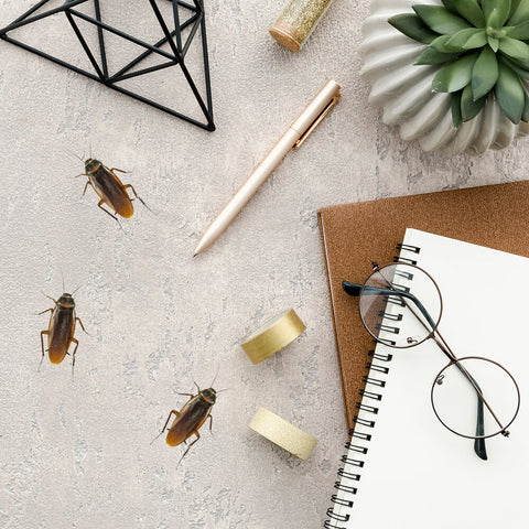 Cockroach wall decal sticker set