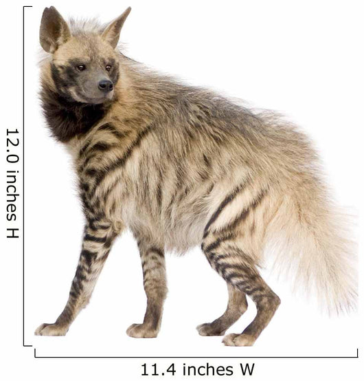 Striped Hyena Wall Decal