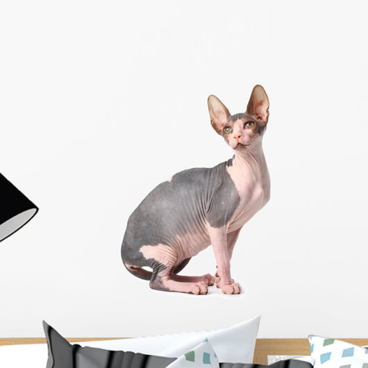Sphynx Cat Wall Decal
