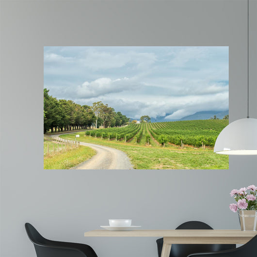 Vineyards February 19 2016 Wall Decal