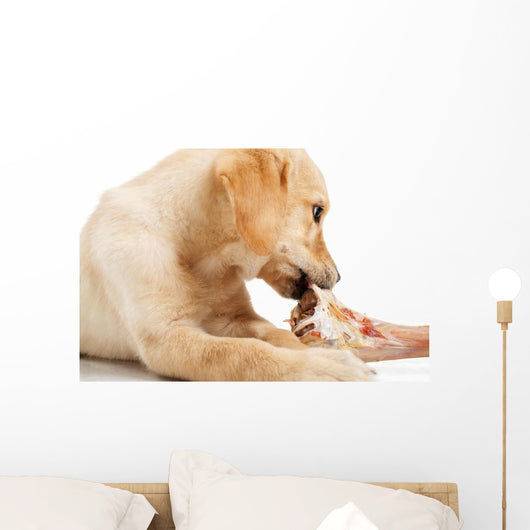 Labrador Puppy Chewing Large Wall Decal