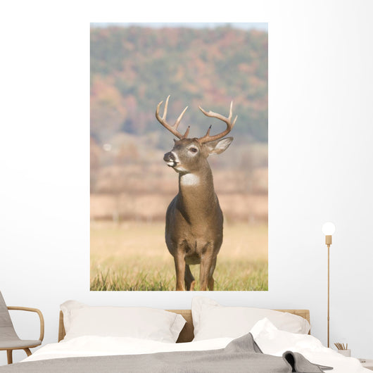 Whitetail Buck and Fall Wall Decal