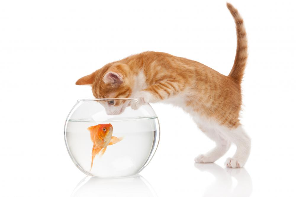 Cat and an aquarium with fish Wall Decal