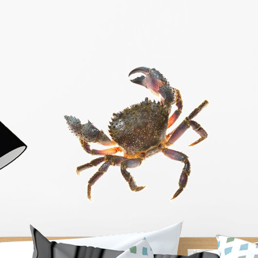 Colorful Warty Stone Crab Wall Decal