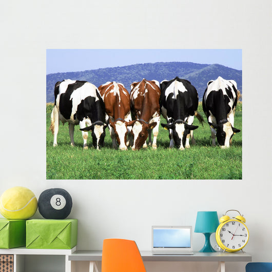 a group of cows grazing Wall Mural