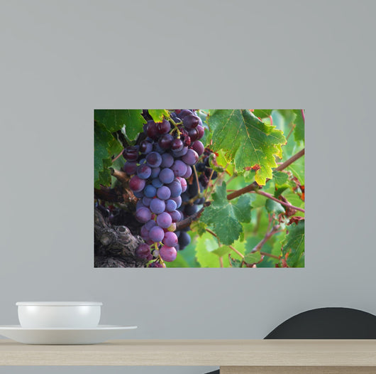 Real Grape Wall Mural