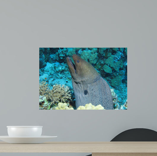 Giant Moray Gymnothorax Javanicus Wall Decal