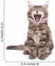 yawning maine coon kitten Wall Decal