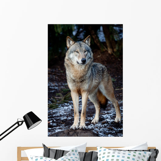 Wolf Wall Mural