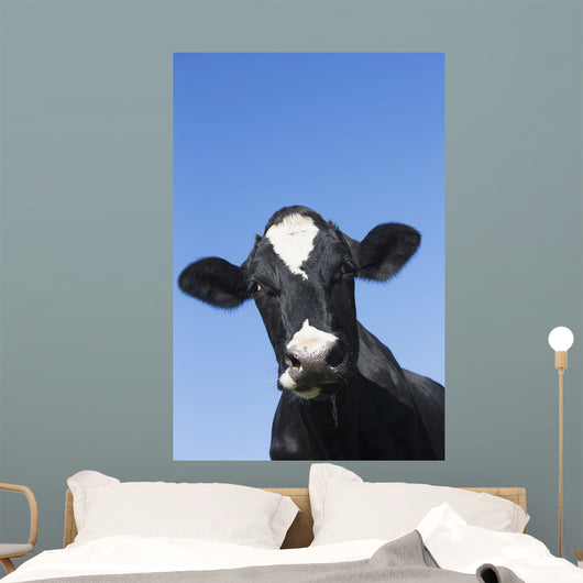 Holstein Dairy Cow Wall Mural