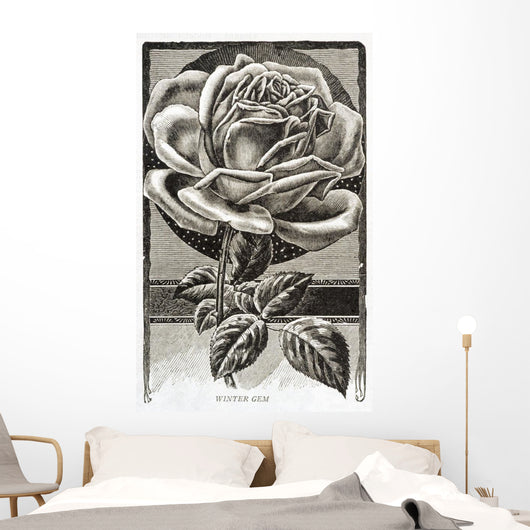 Historic illustration of Winter Gem Rose from 20th century Wall Mural