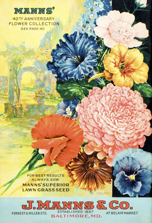 J Mann's seed catalog with illustration of flowers from 20th century Wall Mural