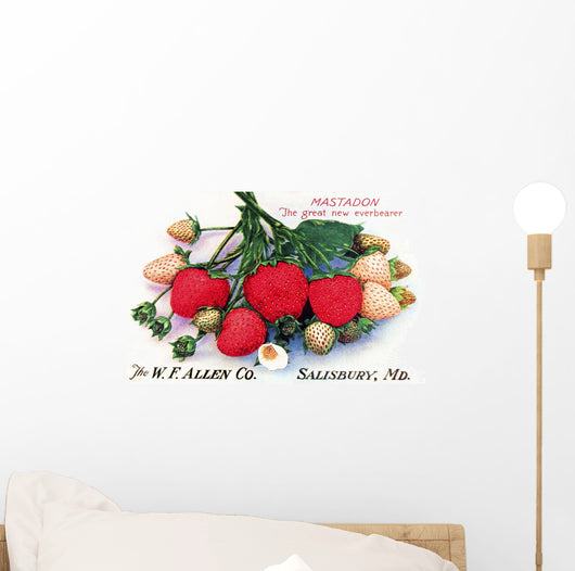 Historic Allen's Book of Berries with illustration of strawberries Wall Mural