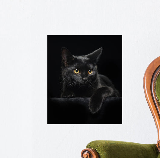Black cat with yellow eyes Wall Mural