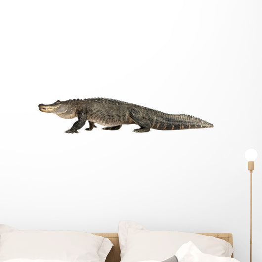 American Alligator 30 Years - Alligator Mississippiensis Wall Decal