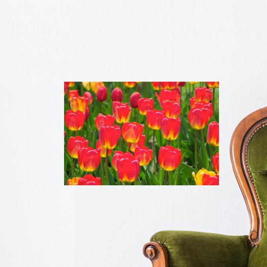 Field of Red Tulips Wall Mural