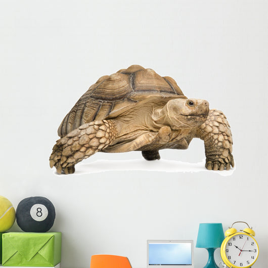 African Spurred Tortoise - Geochelone sulcata Wall Decal