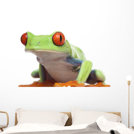 Red-eyed Tree Frog - Agalychnis callidryas Wall Decal